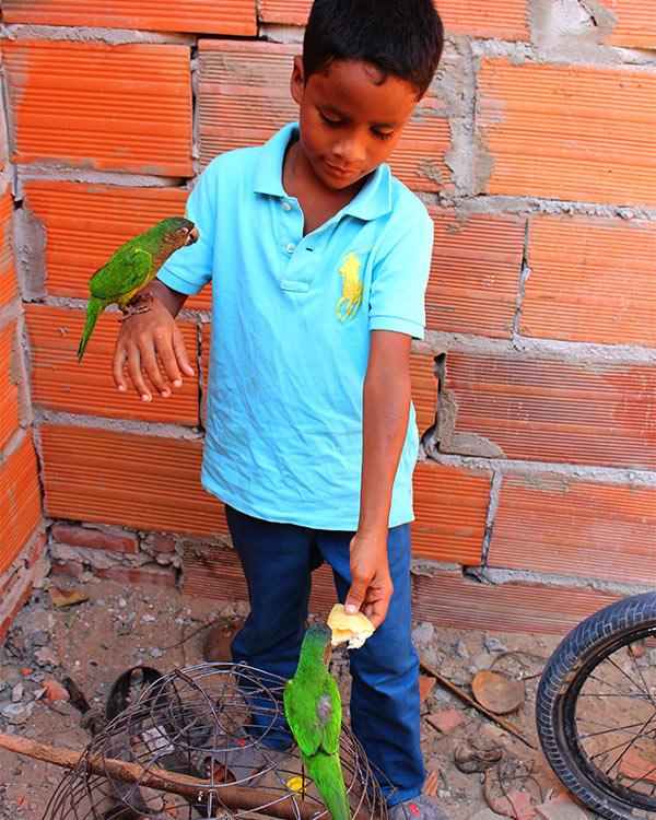 William shows off his pet birds.