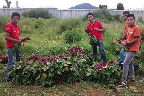 El huerto comunitario en Guatemala produjo remolacha, tomate, zanahoria, cebolla y más, verduras que fueron vendidas por los jóvenes o donadas al programa de nutrición de Children International.